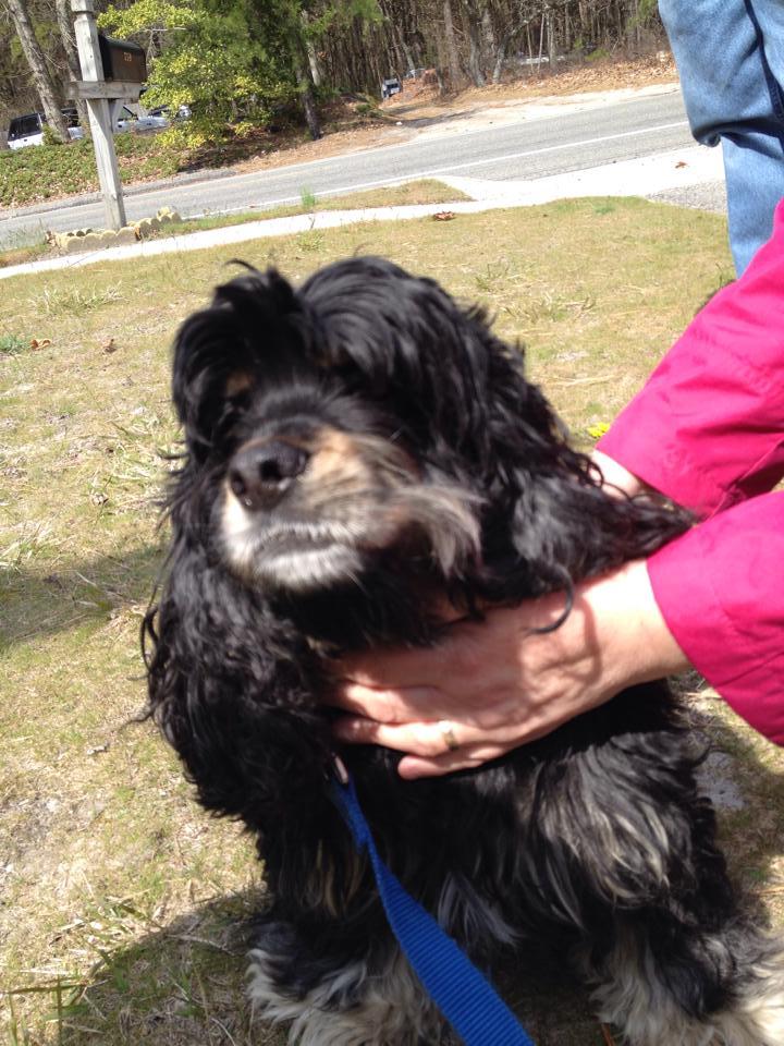 Lost Dog Search Amp Rescue